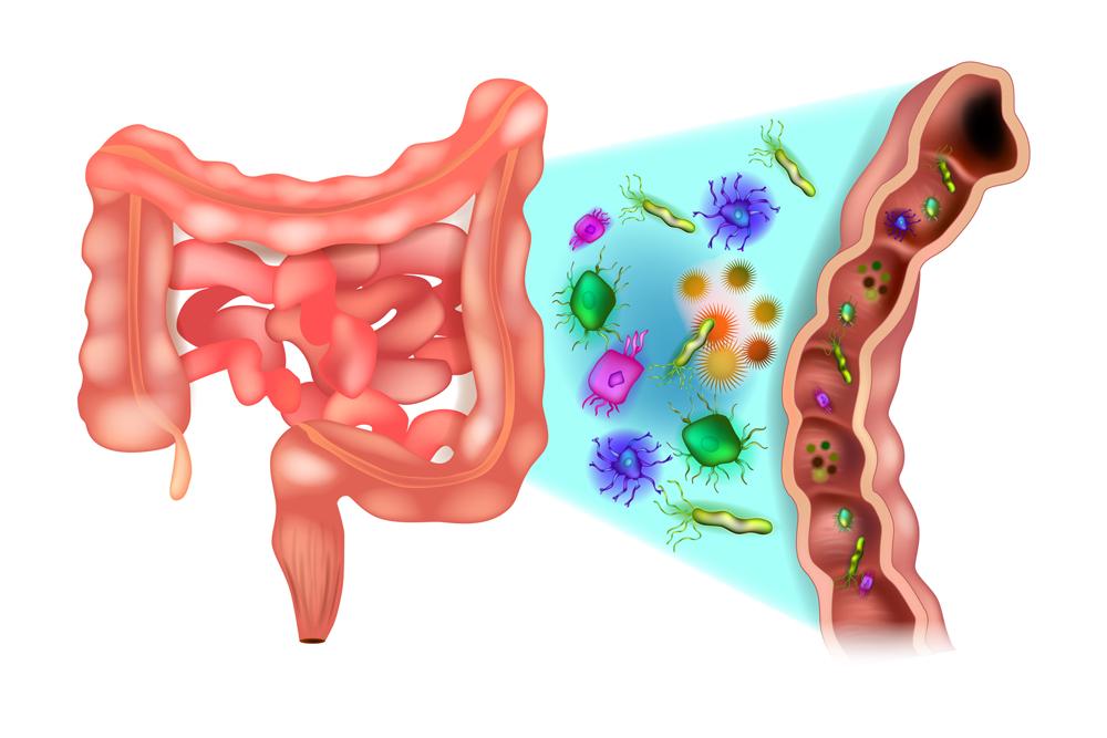 oś mózg jelita mikrobiota